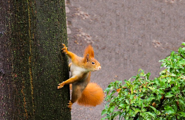 How To Keep Squirrels Out Of Potted Plants